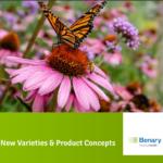 New-Benary-_Variety_Presentation_2022