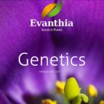 evanthia