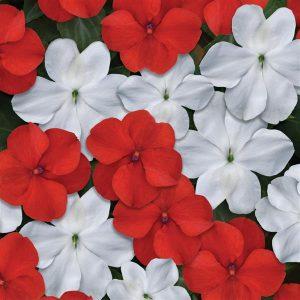 Beacon-Red-White-Mixture