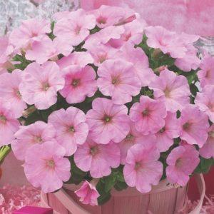 Petunia Trilogy Pink Lips